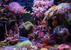 ReeferBoo - 2015 Featured Aquariums - Featured Aquariums - Monthly Featured Nano Reef Aquarium Profiles - Nano-Reef.com Forums