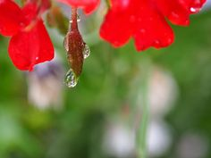 raining drop, flower, raining