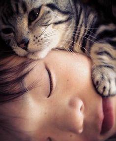 gatinho dormindo com seu dono