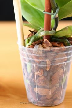 How to RePot an Orchid: A Beginners Guide - House Plants - ideas of House Plants - Orchids are not ordinary plants. This is especially true when it comes knowing how to repot orchids. This article will walk you through the whole process. Orchid Plant Care, Orchid Plants, Air Plants, Indoor Plants, Hanging Plants, Orchid Repotting, Orchid Flowers, Cactus Flower, Exotic Flowers