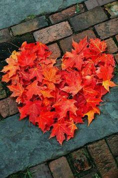 Orange leaf heart #autumn #heart