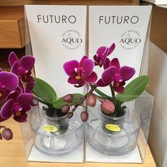 @optiflororchids  #futuro kleinste orchidee die 6 weken zonder #water kan dankzij innovatie.