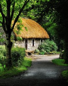 irish country lane.. by Michelle McMahon