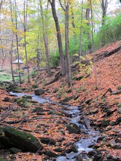 Stream inside the Dundas Valley Conservation Area