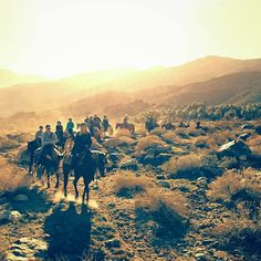 Indian Canyons ride at Sunset. Smoke Tree Stables.