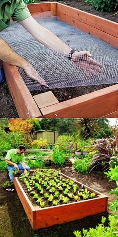 Line your raised bed with chicken wire to keep out gophers and moles! (My-FavThings) - Line your raised bed with chicken wire to keep out gophers and moles! Raised Vegetable Gardens, Vegetable Garden Design, Raised Garden Beds, Raised Beds, Vegetable Gardening, Raised Gardens, Vegetable Ideas, Garden Soil, Garden Fences