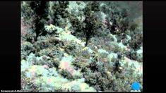 Περιοδεία της Βασίλισσας Φρειδερίκης στη Δυτική Μακεδονία και την Ήπειρο - YouTube Greek Royalty, Youtube, Plants, Painting, Painting Art, Greek Royal Family, Paintings, Plant, Painted Canvas
