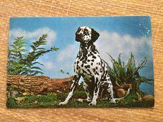 Vintage Purebred Dalmation Postcard by ElkHugsVintage on Etsy