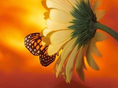 Financial stress can strengthen or destroy a relationship. Find out 5 ways to make it through money problems as a team. Financial Stress, Love Others, Peaceful Places, Monarch Butterfly, Make It Through, Gerbera, Absolutely Stunning, 5 Ways, Framed Artwork