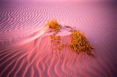 Mungo National Park in far Southwest NSW, Australia; Photo by Glenn Guy, Blue Sky Photography Blue Sky Photography, Flora And Fauna, Wearable Art, National Parks, Australia, Explore, Adventure, Landscape, Oasis