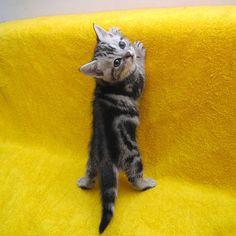 Source: Flickr / pink77 - http://www.flickr.com/photos/pink77/3209179653/in/faves-jocelyndurston/