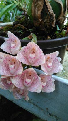 HOA GIEO TỨ TUYỆT 2 - Page 16 Fcfb1474eccac5d68b2f36a03c563fee--orchids