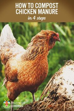 Chicken Manure Compost: 4 Steps to Use Your Chickens' Poop as Garden Fertilizer