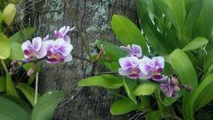 Orquídeas na unidade Barra