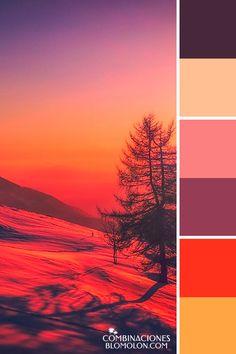 combinacion de colores variedad de temporada 6