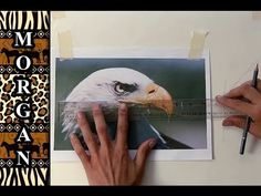 ▶ How to Transfer a Drawing or photo to Canvas for Painting - Jason Morgan Wildlife Art - YouTube