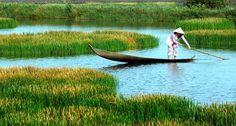Paysage paisible à Ca Mau - le point extrême du Vietnam. En savoir plus: http://www.khoaviettravel.fr/guides/Voyage_Destinations/Delta_du_Me_kong.html #voyageauvietnam #voyagevietnam #khoavietravel #câmuvietnam #vietnamtravel