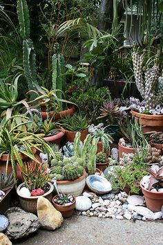 Cactus Garden.....once I have my roses planted in the ground and out of containers, freeing up space.