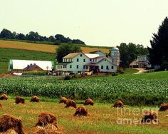 Amish Farm on Laundry Day ~ Desiree Paquette
