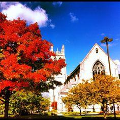 Case Western Reserve University in #Cleveland #fallohio