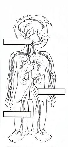 El aparato circulatorio para niños para colorear - Imagui | Escuela ...