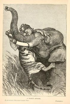 sombhatt:    The Ivory King: A popular history of the elephant and its alliesBy Charles Frederick Holder