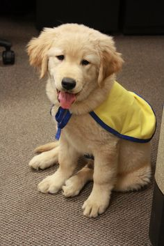 The adventures of puppy raising for Canine Companions for Independence