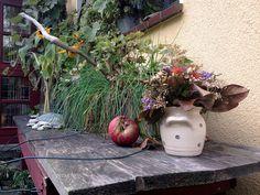 Stilleben im Wintergarten von Lydia Feucht. #Herbst #Winter #Garten #Idylle #Stimmung #Blumen #Impressionen #Inspiration #Dekoration #Landhausstil #Atelier #Deko Plants, Inspiration, Atelier, Winter Garden, Mood, Cottage Chic, Fall Winter, Flowers, Dekoration