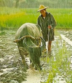 Taiwan - farmer in the rain