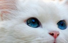 This looks like my Grandmas cat, snowflake!!! R.I.P Snowflake