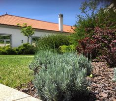 Our beautiful gardens around the hotel....  #hotel #hotellife #travel #theyeatman #porto #garden #flowers #nature #luxury #hotel #porto