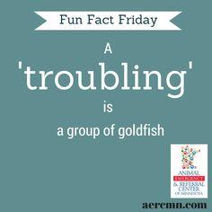 #FunFactFriday #fishfacts #animalfacts #funpetfacts #troubling #AERC #TwinCitiesanimalhospital #TwinCitiespetlovers