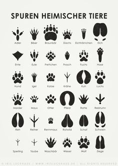 Sheets for the identification of different leaves, animal tracks and flying birds. Available as poster oder print at Posterlounge and as postcards at Artflakes. Also part of the \