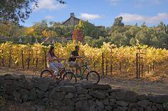 wine tasting bike tour through Napa Valley!