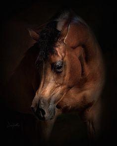 impressivepowerfulhorses-11