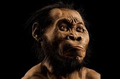 A photo from the October issue of National Geographic shows a reconstruction of Homo naledi's face. (Mark Thiessen/National Geographic via AP) National Geographic, Charles Darwin, Anthropologie, Hominid Species, Human Family Tree, University Of The Witwatersrand, Especie Animal, Face Change, Homo