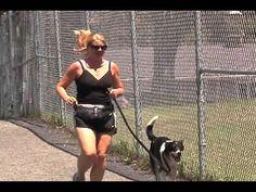 Keshet Kennels/Rescue - Keeping The Dogs in Shape