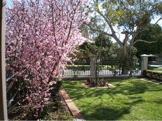 Garden Design Ideas - Photos of Gardens. Browse Photos from Australian Designers & Trade Professionals, Create an Inspiration Board to save your favourite images. Farm Projects, Green Earth, Garden Photos, Garden Inspiration, Cherry Blossom, Garden Design, Sidewalk, Designers, Home And Garden