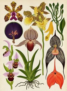 The herbal bed: Katie Scott's psychedelic flora and fauna – in pictures Nike trainers sprout plants and French perfumiers inspire by mysterious scientific icons in Katie Scott's visions that take botanical illustration into the digital age Art And Illustration, Floral Illustrations, Vintage Botanical Prints, Botanical Drawings, Vintage Botanical Illustration, Botanical Flowers, Botanical Art, Exotic Flowers, Fresh Flowers