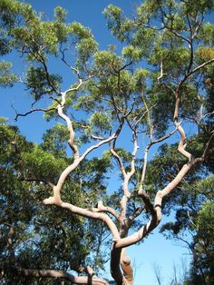 how to clean gum tree lesves staind from concret