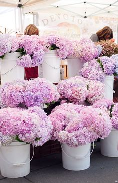 Lilac in buckets - a beautiful spring display