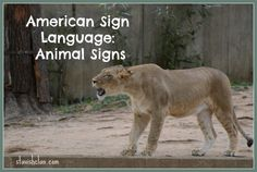Simply Stavish: American Sign Language Animal Signs for Your Toddler and Preschooler. Pinned by SOS Inc. Resources. Follow all our boards at pinterest.com/sostherapy for therapy resources.