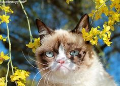 Grumpy cat and shadows of flowers