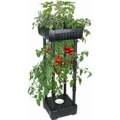 Upside-Down Patio Garden. I love this upside down planter. I have one with tomatoes and peppers and one with herbs and flowers. It provides twice the space for planting on my patio and the plants really grow well upside down. Who knew?!!