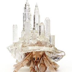 japanese artist aki inomata creates intricately crafted #3Dprinted habitats for #hermitcrabs, which are influenced by the #architecture of major cityscapes, like the #newyorkcity skyline pictured here. the semi-transparent, delicate forms are designed in the style of physical human environments, which ironically become a shelter for the aquatic arthropods.⠀ ⠀ ⠀ see more about the project on #designboom #hermitcrabs #akiinomata