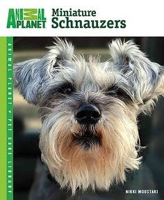 Miniature Schnauzers are clever dogs whose intelligence is coupled with their energetic nature. This comprehensive guide offers helpful training tips to make the most of your dogs natural abilities. T
