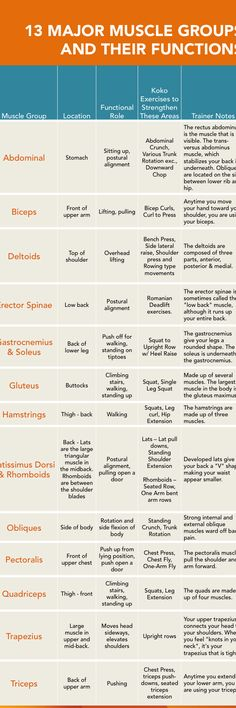 13 Major Muscle Groups
