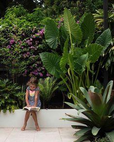 Tropical Garden, Tropical Plants, Tropical Landscaping, Blue Haven Pools, Landscape Design, Garden Design, Exotic Plants, Create Space, Home Schooling