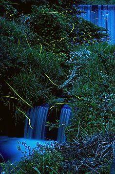 Japanese firefly at Hiekawa, Izu, Shizuoka, Japan Shizuoka, Gods Creation, Fireflies, Vacation Places, Wonders Of The World, Places To See, Natural Beauty, Travel Photography, Scenery