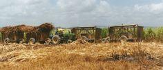 Sukkerrørshøst. Den Dominikanske Republik. Peter Krog.